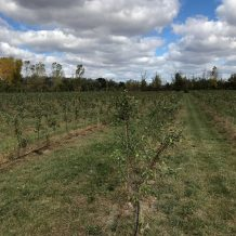 Buena Vista Apple Orchard